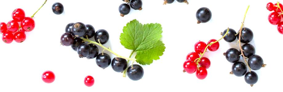 polyphenols-fruits-groseilles